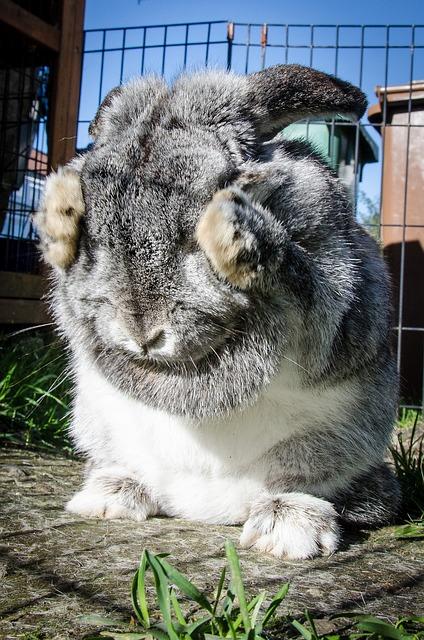 rabbit-963167_640